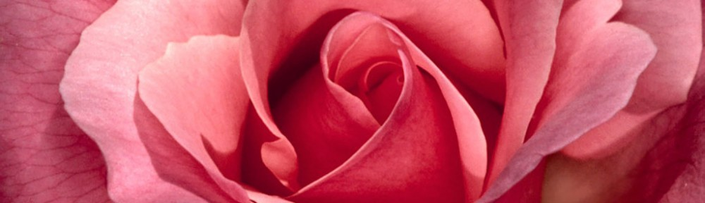 cropped-Pretty_In_Pink_Roses1.jpg